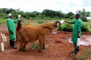 Exploring Karen in Nairobi, Kenya, with a Toddler and an Infant