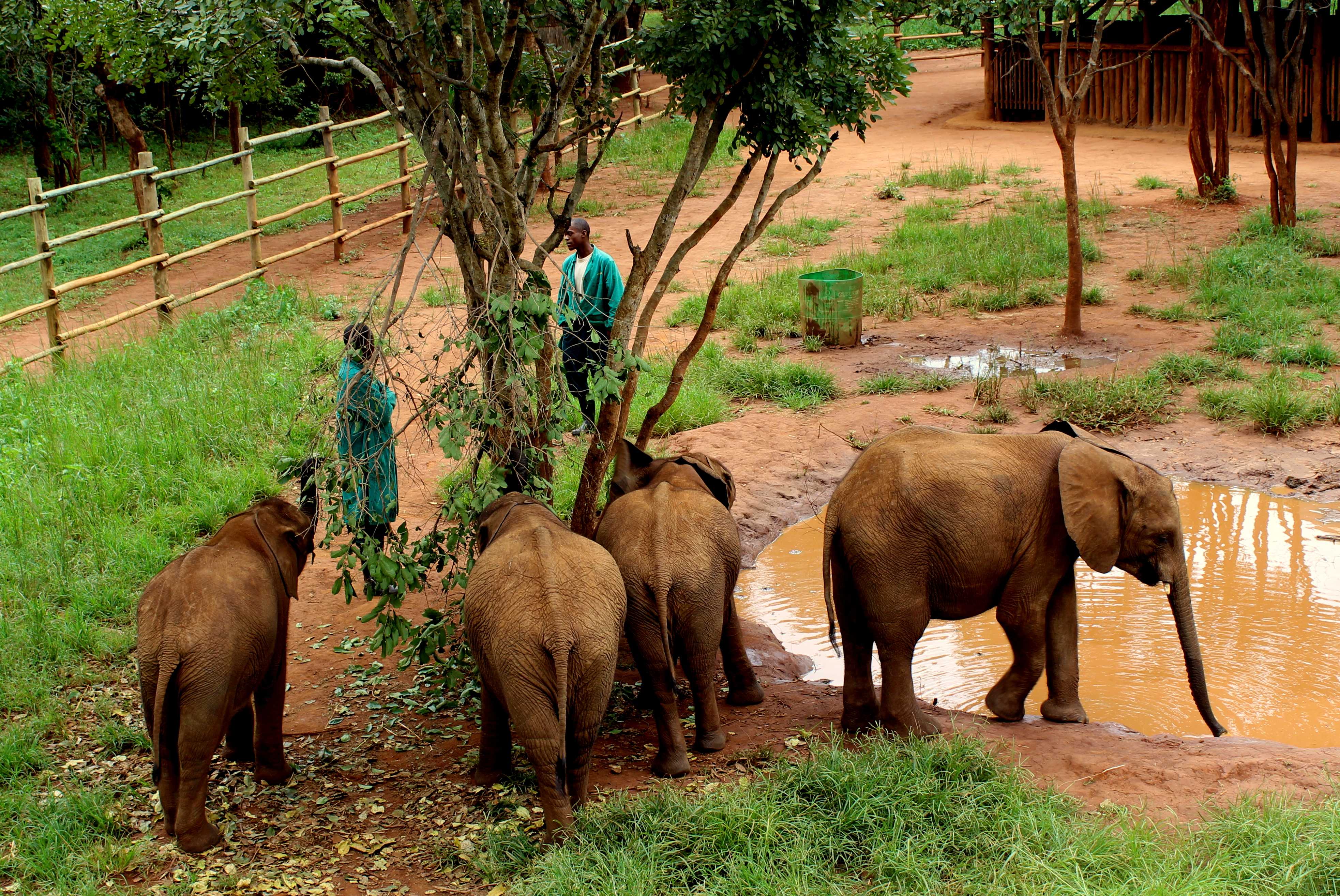 Lilayi Lodge and Elephant Nursery in Lusaka, Zambia ...
