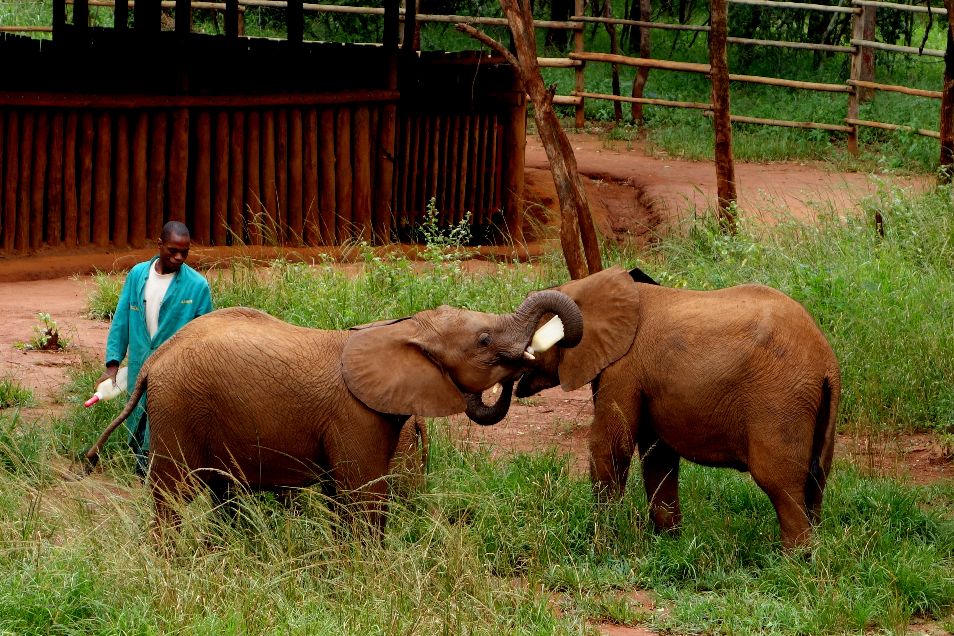 Lilayi Lodge and Elephant Nursery in Lusaka, Zambia
